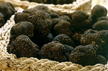 FOOD & SENS melanosporum